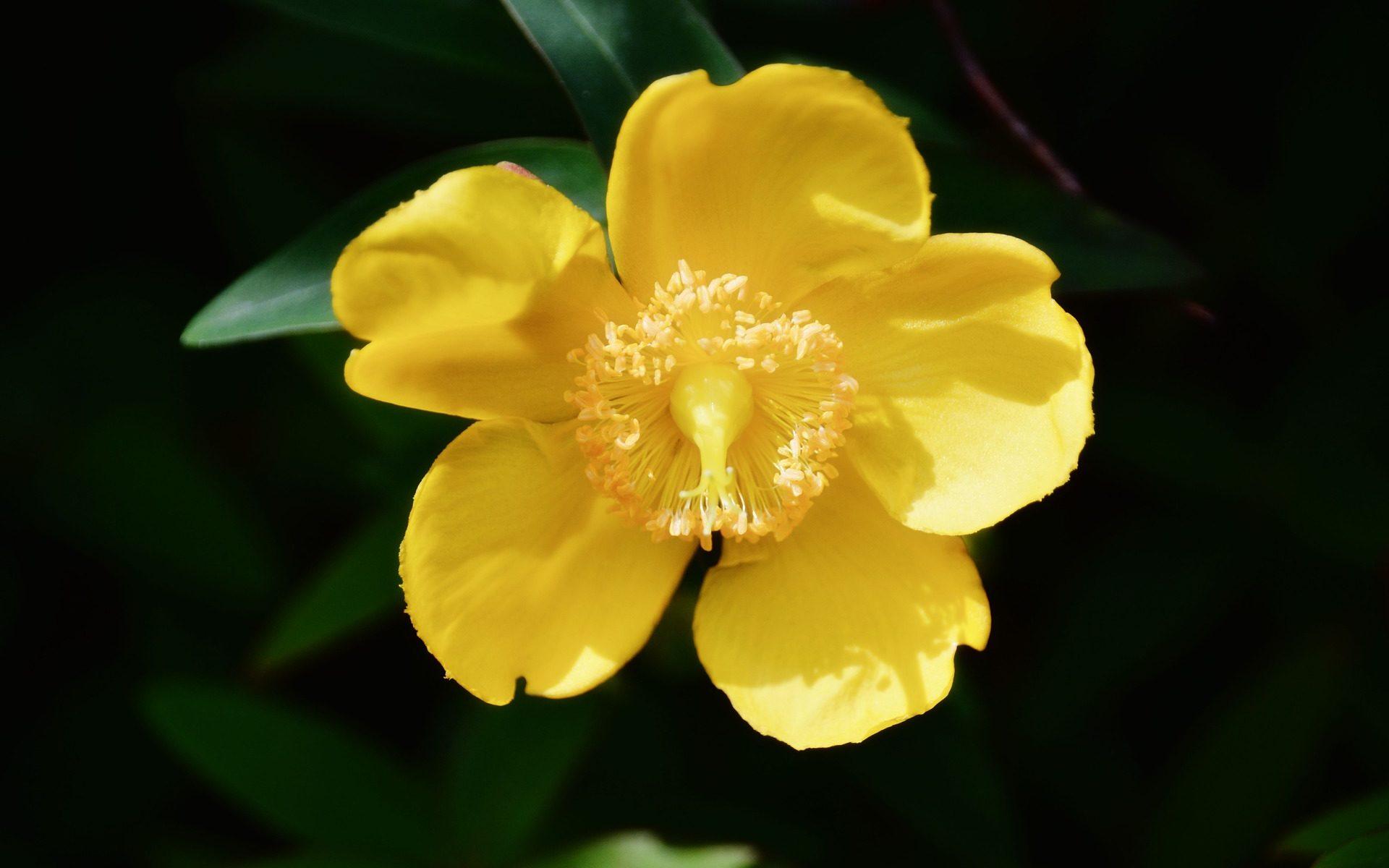 Therapie-Du-Australische-Buschblüten-Bachblüten