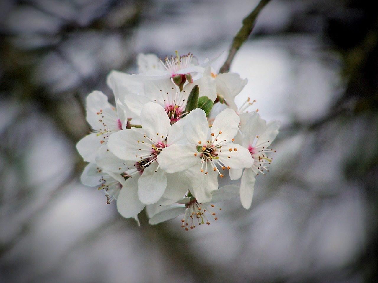 Bachblüten-Ungleichgewicht-Symptome
