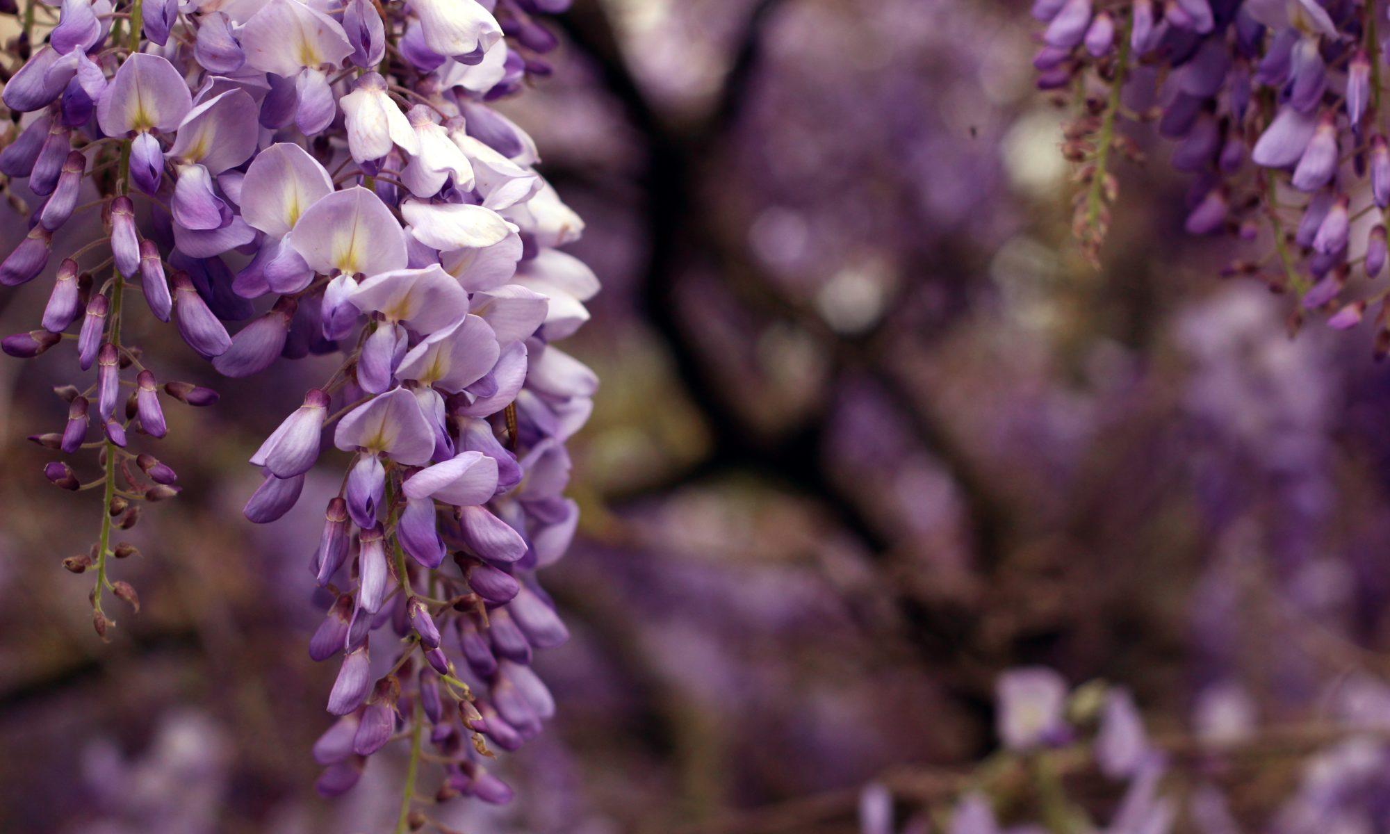 Australische Buschblüten Therapie